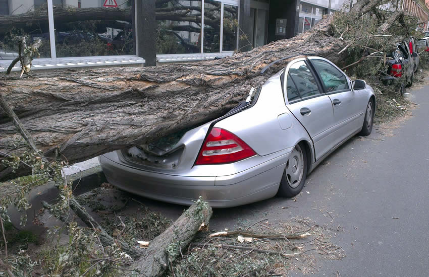 Car crashed under a tree trunk